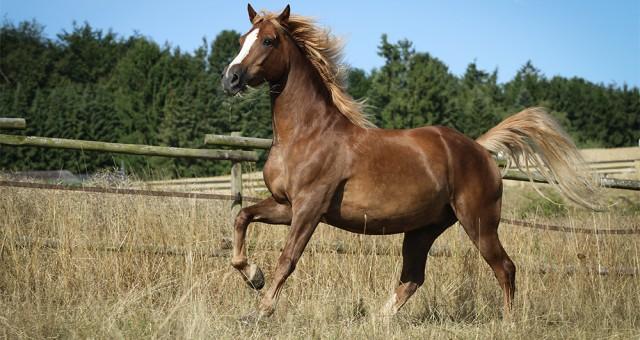 Sie suchen noch einen tollen Einstellplatz für Ihr Pferd?