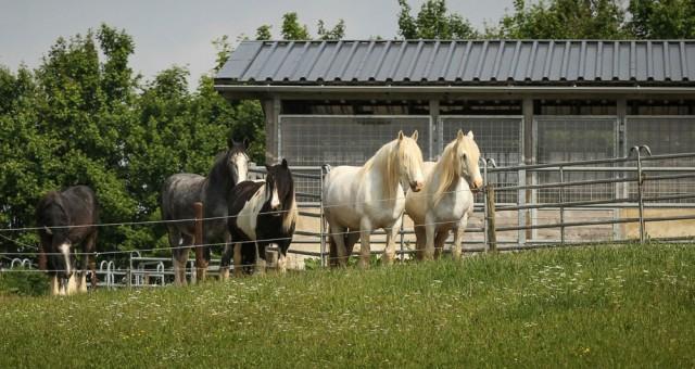 Pferdeausbilder gesucht!